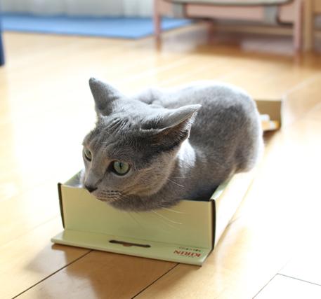 エマ箱入り娘