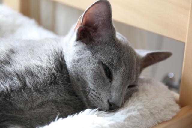 テオ寝顔2