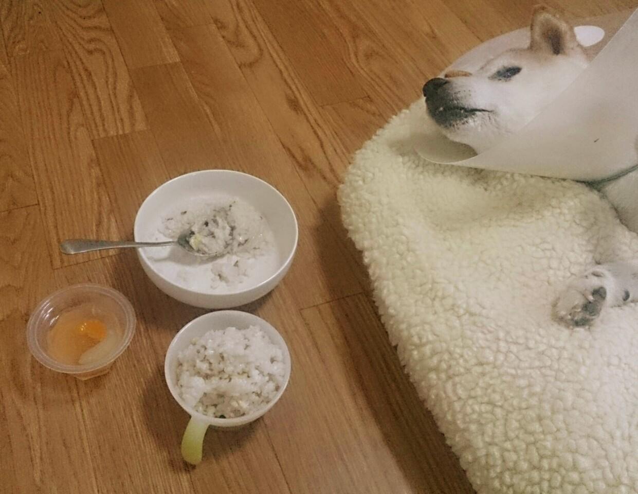 たろの食事