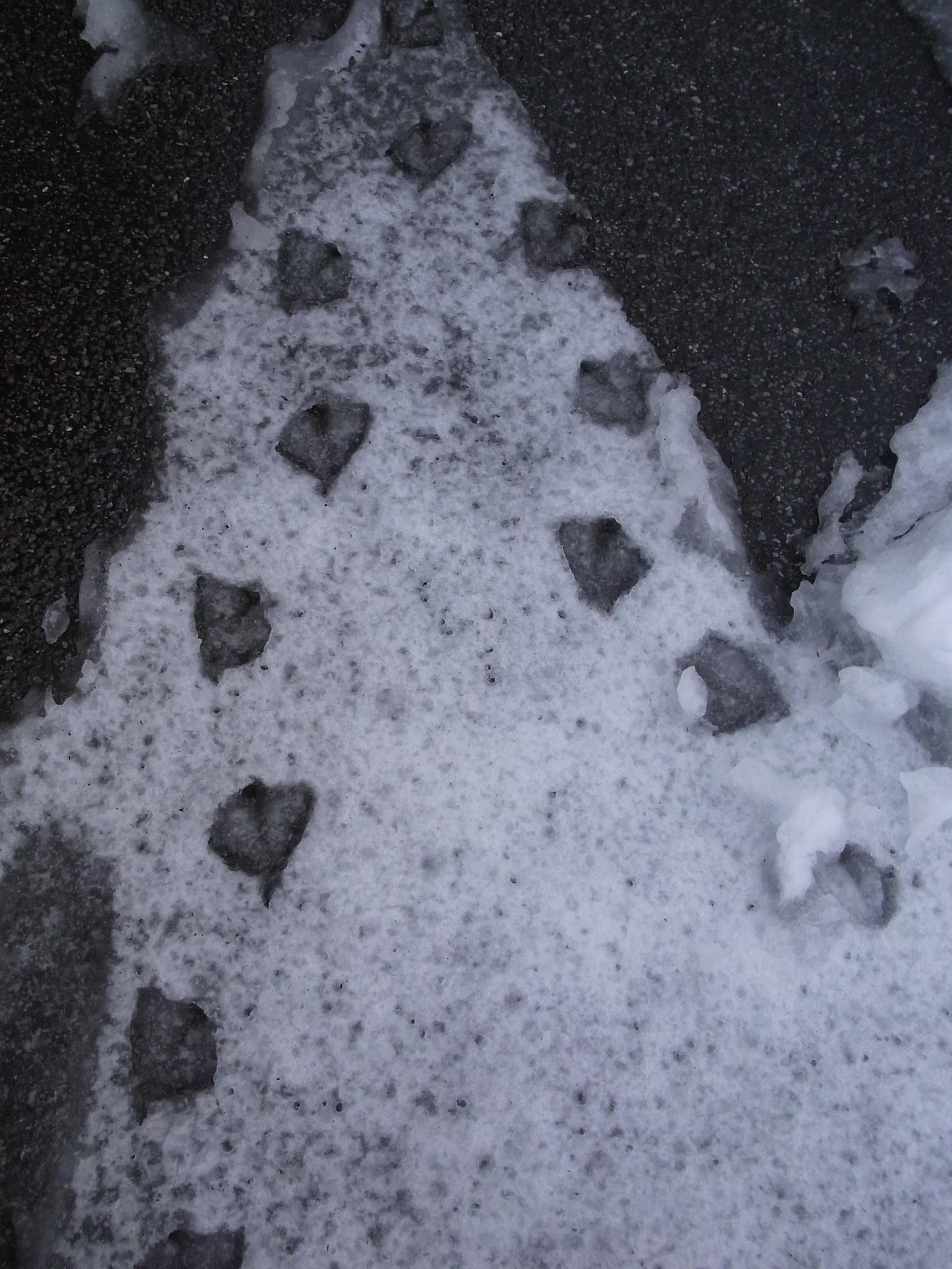 160118雪 (18)