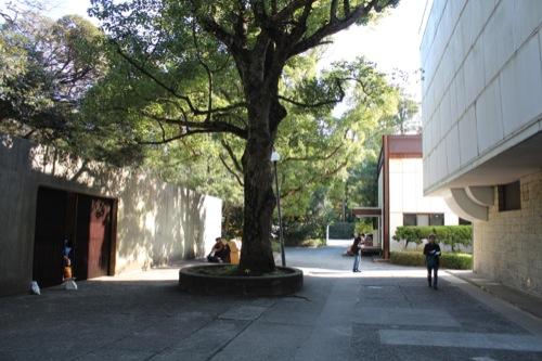 0050:神奈川県立近代美術館鎌倉館 左に学芸員棟 右に本館 奥に新館