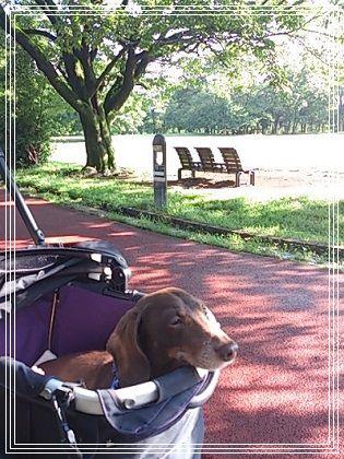 公園でのぽんちゃん4