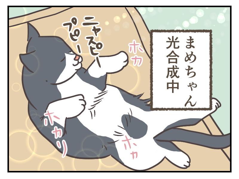 猫まめはアーティのマットの上でお昼寝中