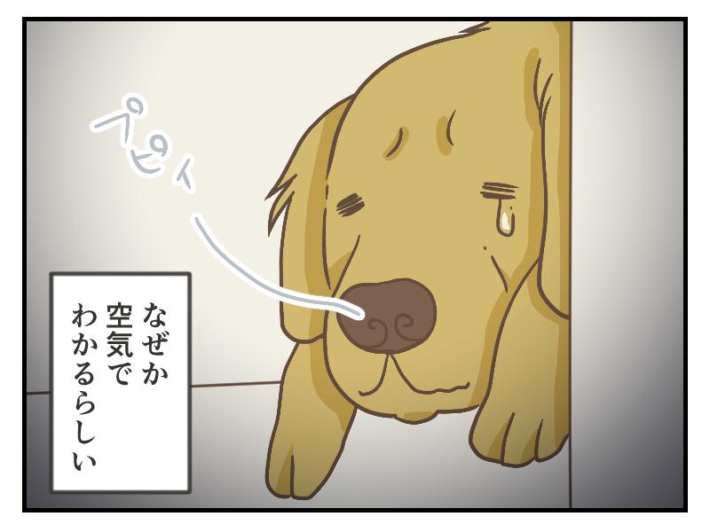 犬は雰囲気で、どこに行くかがわかるのでしょうか?