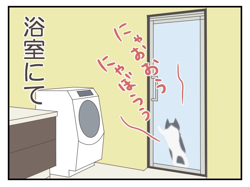 お風呂の中に閉じ込められた様子の猫まめ