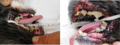 歯の写真ブログ_convert_20160103162001