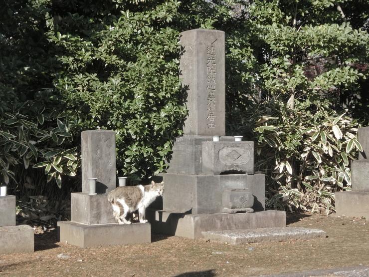 谷中霊園のねこ