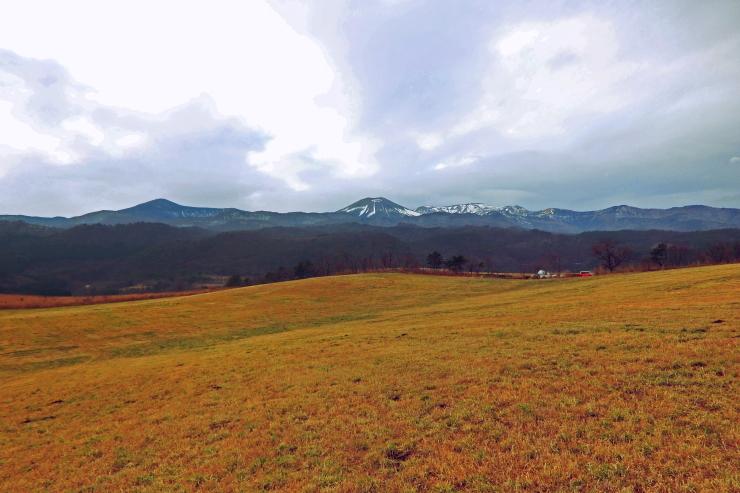 初冬の草原にて