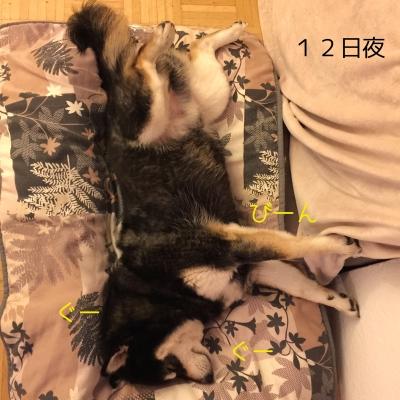 足びーんで寝るロザ