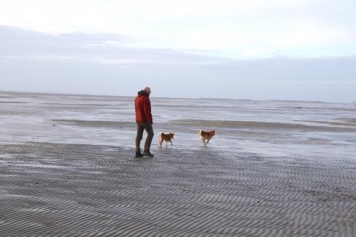 海岸をアドと歩く