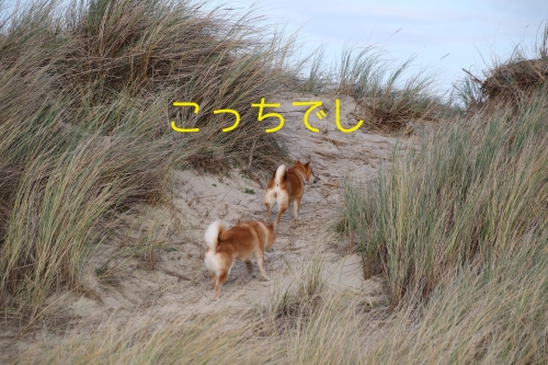 砂丘、狩りに行く。