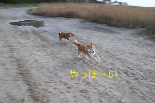 砂浜を走る2匹