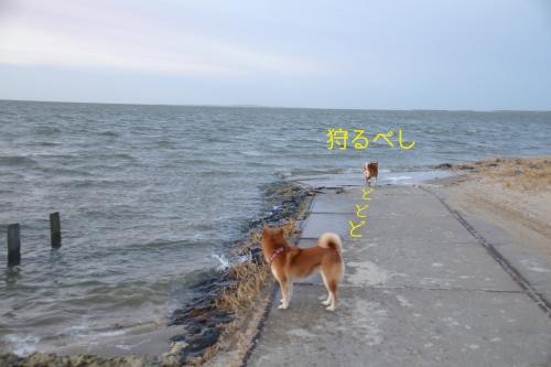 波を狩りたいセナたん