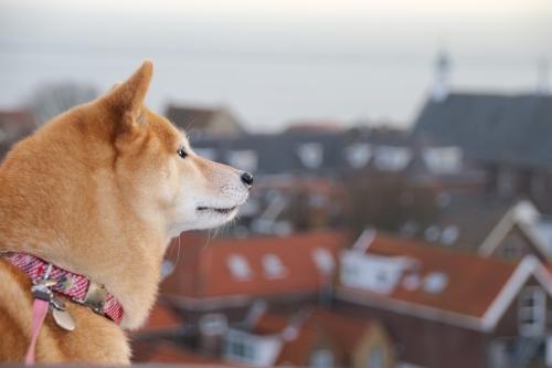 街を眺めるアスカ