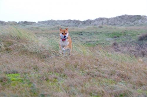 荒野を走るセナたん