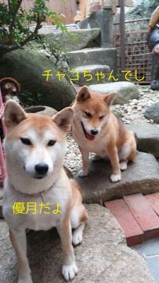 チャコちゃんとゆうづきちゃんの写真