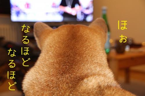BBCの犬番組を見て