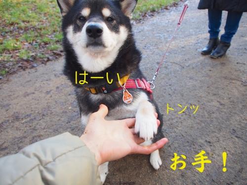 ロッちゃんのお手実験2