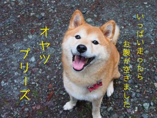 山散歩10-01-5