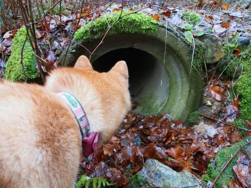 トンネルを覗き込むアスカ