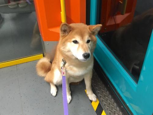 普通に犬が乗っている