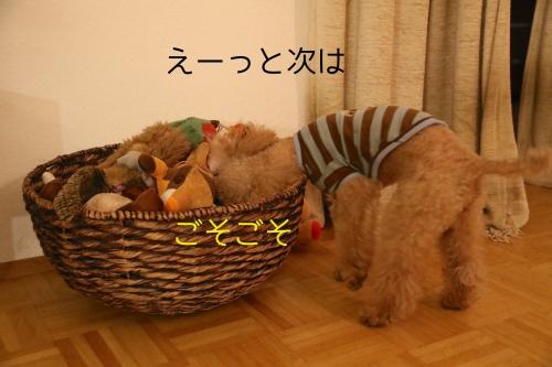 おもちゃ箱をゴソゴソジャムさん