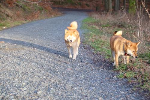 6日の山散歩3