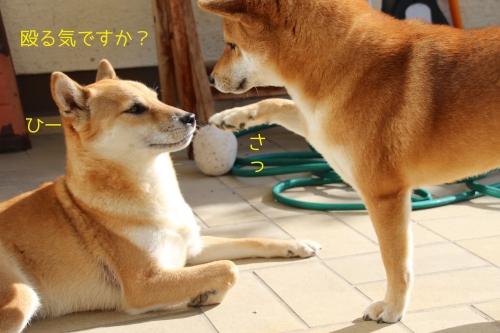 雑に扱われる柴男3