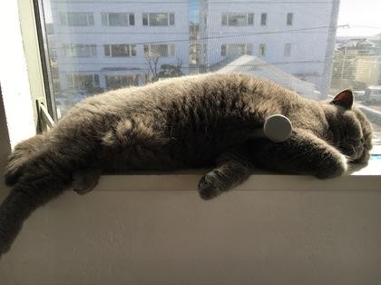 しばらくすると寝てる