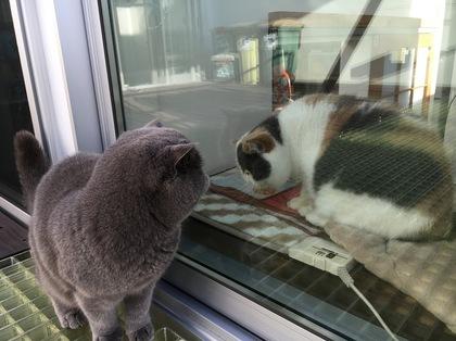 窓越しに見つめ合う