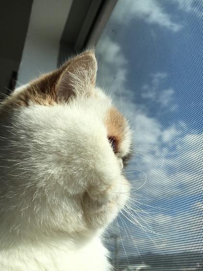 窓際に乗る