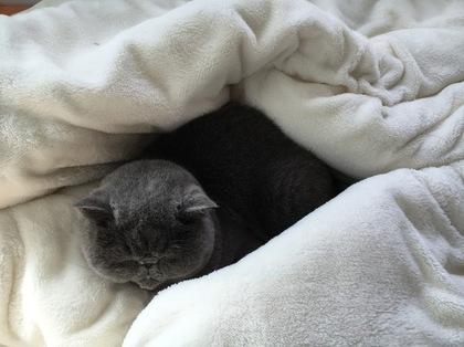 お昼もココで寝てた!