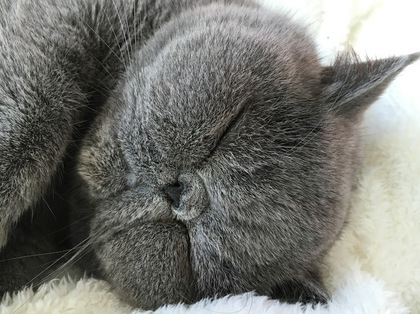 可愛い寝顔