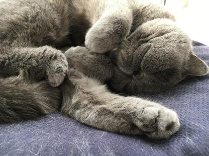 平ちゃんの寝顔は最高
