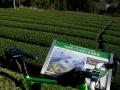 151230和束石寺地区の茶畑.1