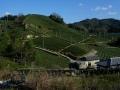 151230和束石寺地区の茶畑.2