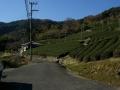 151230和束石寺地区の茶畑.3