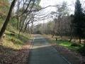 160103木立の中を行く自転車道
