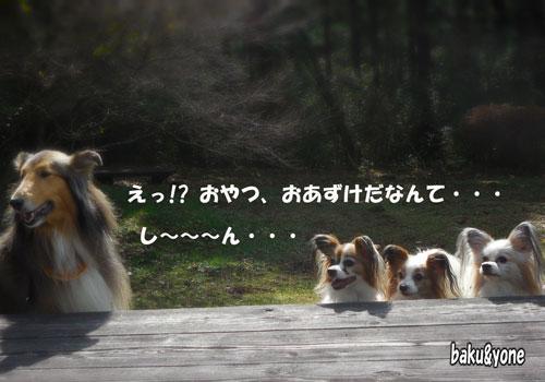 マリンちゃんとワンディーズ_3