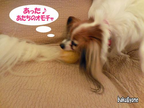 シッポとおもちゃ_01
