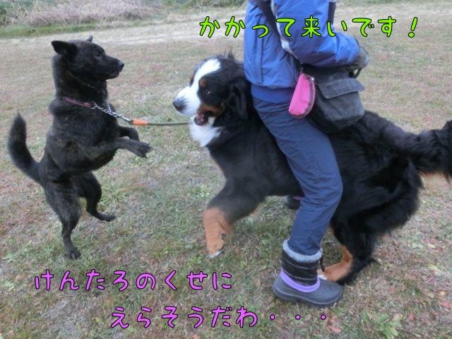 CIMG0051_201602011017095b3.jpg