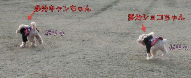 CIMG0195.jpg