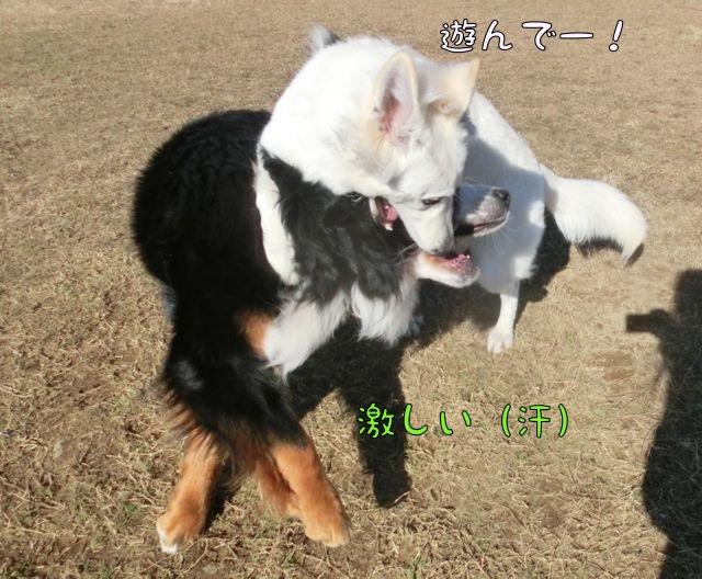 CIMG0466_20160209085140a82.jpg