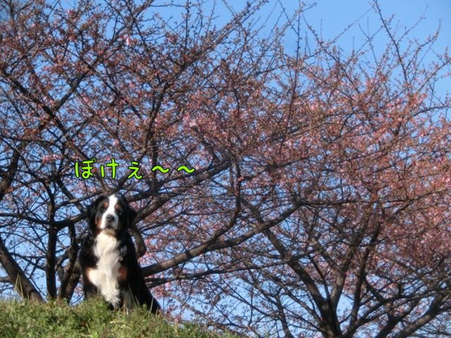 CIMG0687.jpg