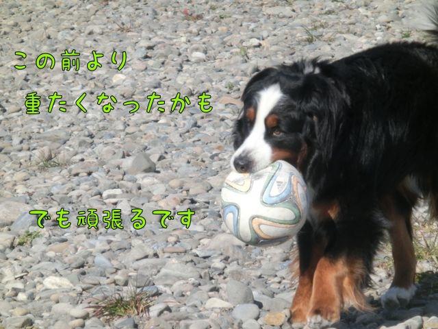 CIMG0706_20160212125234ac4.jpg