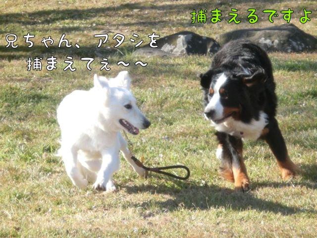 CIMG0746_20160213113703693.jpg