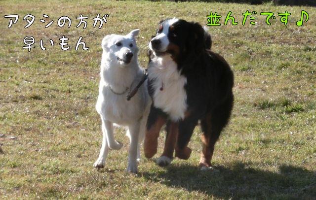 CIMG0750_20160213113704ade.jpg
