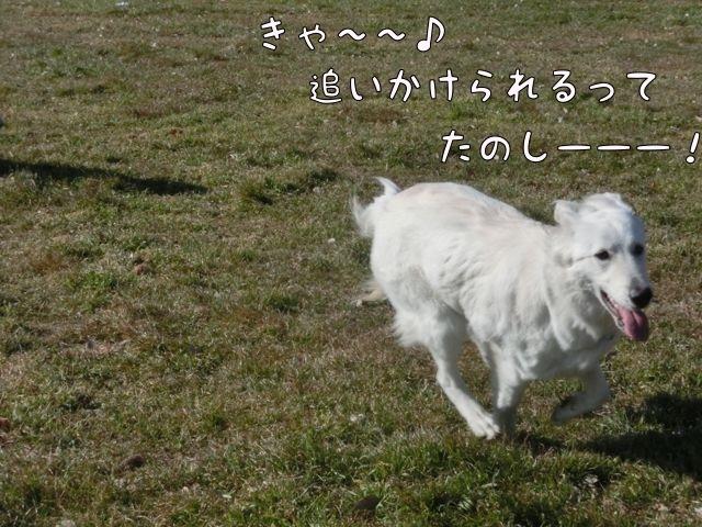 CIMG0768.jpg