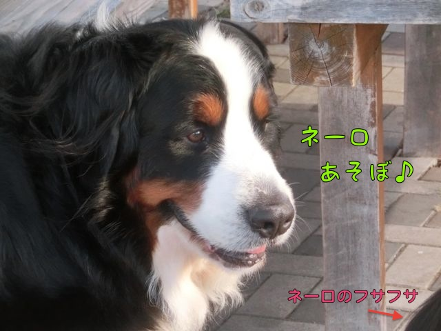 CIMG8724_2015122815011399e.jpg