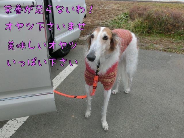 CIMG8770.jpg